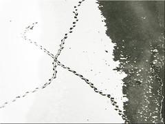Entenspuren (juvhadamar) Tags: limburganderlahn limburgweilburg lahn enten x eis wasser