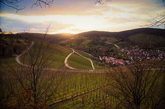 Sunshine (DrQ_Emilian) Tags: lanscape view hill vineyards sky clouds nature sun sunset sunshine sunlight evening dawn mood frame trees brnaches rural countryside outdoors travel explore wanderlust stetten kernen remstal badenwürttemberg germany europe details light colors season january 2018