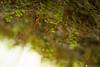molina 12 (formicacreativa) Tags: parcodellecascatedimolina verona lessini lessinia roccia trama paesaggio acqua cascataallaperto grotta caverna calma foresta albero animale erba macro legno cascata