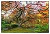 Japanese Garden (msankar4) Tags: or oregon foliage waterfall water japanesegarden portland lantern peace northwest pacificnorthwest ishidoro stonelantern enlighten msankar sankar sankarraman sankarramanphotography