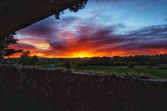When the Sky is on Fire (léon.key) Tags: cow fields sun beautiful hobbiton travel zealand new newzealand nz uww uwa wideangle 1116 foreground red fire sunset