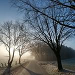 Morgennebel im Winter thumbnail