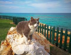 Ciprus/Protaras (Torok_Bea) Tags: cyprus ciprus protaras beach protarasbeach cats catslife love beautiful cute huaweifoto huaweimate9 mate9 huawei