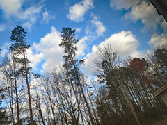 Backyard Woods This Morning. (dccradio) Tags: lumberton nc northcarolina robesoncounty outside outdoors nature natural beauty scenic tree trees cloud clouds whiteclouds sky bluesky morning goodmorning sticks branches treelimbs treelimb treebranch treebranches canon powershot elph 520hs
