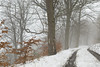 Misty wood in Wensleydale, Yorkshire Dales. UK (Wend's photography) Tags: atmosphere alpine britain countryside dales england fog mist woods woodland wensleydale wwwwendsphotographycouk wendsphotography beech trees path snow snowscape