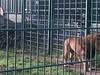 100_0158 (kevinrayworth) Tags: blackpoolzoo blackpool zoo
