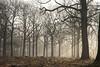 (vyclem78) Tags: forêt rambouillet arbre arbres bois lumière soleil yvetteclemenson paysage