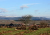 Sicht auf den Haardtrand (Moanda) Tags: haardtrand pfälzerwald südlicheweinstrase weinberg