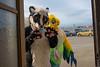 DSC02047 (Kory / Leo Nardo) Tags: fur furry fursuit fursuiting costume cosplay animal fursona space camp party alameda faction brewing 12118 pupleo thebayareafurries