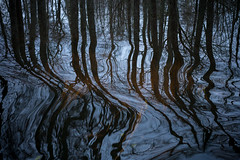 Back in the Woods (Stefan Waldeck) Tags: water trees reflections leaves watergrass movement karlskoga sweden 2018 netzki stefanwaldeck stefan waldeck värmland