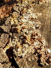 DSCF0506 (AliaGrafica) Tags: wood woods legna alberi trees countryside campagna pattern earth terra macro leaves foglie autunno autumn winter inverno