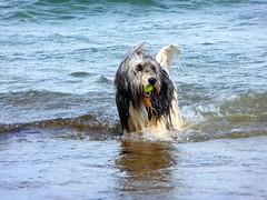 Juhu....I got it !!! (libra1054) Tags: dogs chiens cani cães perros hunde