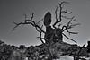 Hidden Behind an Old Tree (Black & White, Arches National Park) (thor_mark ) Tags: 128feet 128 39m archesnationalpark azimuth148 balancedrock balancedrocktrail blackwhite blueskies butte canvas canyonlands capturenx2edited centralcanyonlands colorefexpro coloradoplateau day6 desert desertlandscape desertmountainlandscape desertplantlife elephantbutte highdesert imagecaptureinmonochrome intermountainwest landscape largebushes layersofrock lookingse nature nikond800e oldtree outside portfolio project365 rockformations sunny trees utahhighdesert utahnationalparks2017 walkingaroundbalancedrock windowssection ut unitedstates ideasigotfromothers