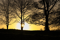 Shining through (A Costigan) Tags: dusk sunset trees silhouettes sun sunshine golden outdoor