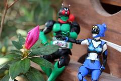 Azalea Amore 2018 02 (MayorPaprika) Tags: canoneosrebelt6i shfiguarts bandai tamashiinations maskedrider1 powerrangers akiba ranger 112 azalea bloom flower spring kamenrider