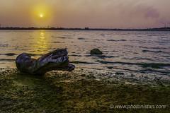 Colors of Sun Set (Photonistan) Tags: sunset colors log treetrunk seashore redsea yellow magenta brown