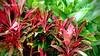 Jardim colorido. (CRMacedonio) Tags: crmacedonio folhagem jardim jardinagem paisagismo garden brasil