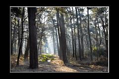 Doorkijkje (hejos54) Tags: winter canon eos5m3 bos forest bomen trees oostmalle joshendriks koud kil killemorgen