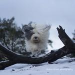 Scarlett's winter jump thumbnail