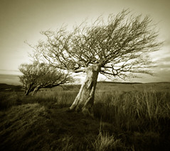 After walking with god (wheehamx) Tags: pinhole xray fairlie moor beech tree wide angle squishy cam