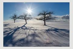 Wintersonne (SonjaS.) Tags: schnee winter sonne sun stahlen blendenstern schatten shadow januar