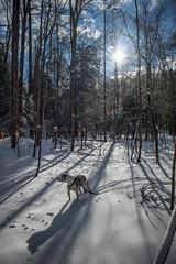 Hell Hollow (kevincarlvail) Tags: canon canonm6 juneau pitbull pitbulls dog lakecounty lakemetroparks park hellhollow ohio snow winter sun