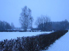 winter scape (VERUSHKA4) Tags: canon europe russia moscow city cityscape nature neve vue view outdoor birchtree bush sky day january winter white grey bw path hiver people angle branch ville astoundingimage