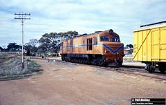 3145 XB1008 Wickepin 8 July 1982 (RailWA) Tags: railwa philmelling westrail 1982 xb1008 wickepin
