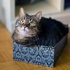 Hey, who shrunk my box? (Matjaž Skrinar) Tags: 100v10f 250v10f 500v20f