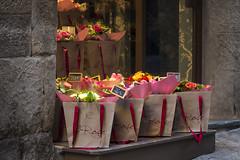 "Bologna -  ""Il quadrilatero"" - Via Marchesana (Massimo Battesini) Tags: bologna emiliaromagna italia it olympusem5markii olympus em5markii panasoniclumixgxvario35100f28 panasonic lumix panasonic35100mmf28 centrostorico zentrum centreville centromedievale centremédiéval medievalcenter centromedieval città ville city stadt town ciudad ilquadrilatero italien italy italie viamarchesana europe europa fiori fleurs"