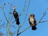 couple (dddaviddd46) Tags: oiseau canal nature animal cormoran canon powershot sx60 hs fabuleuse excellencedumois
