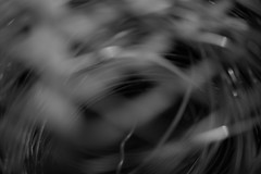 Dizzy (tishpitt1) Tags: swirl spinning dizzy monochrome blackandwhite bw panasonicgf1