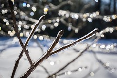 Ice Storm (CollectingImages2015) Tags: icebokeh winter easternnc snowstorm icestorm