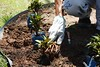 SAUDE Jardin Hospital 03 01 18 Foto Celso Peixoto (23) (prefbc) Tags: jardinagem hospital ruth cardoso saúde