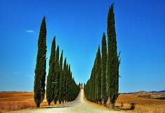 Il viale di Poggio Covili (giannipiras555) Tags: viale toscana natura landscape paesaggio cielo colori