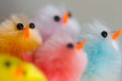 Micro Chicks 2 (mak_9000) Tags: mm lessthananinch chicks bird beaks eyes color colour macromonday yellow orange blue green red pink easter beak