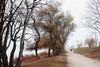 Runner in the fog. (Fencejo) Tags: canon600dt3ikissx5 tamronspaf1750mmf28xrdiiild streetphotography nature landscape runner river ebro fog zaragoza