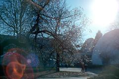 Contax Aria (dmitriy.marichev) Tags: kiev ukraine 160vc vc porta portra160vc film analog contax aria 5017 yashicaml50mmf17 city street style bokeh dmitriymarichev