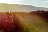 DSC_0014.NEF - Dry-stone flare (SWJuk) Tags: swjuk uk unitedkingdom gb britain england yorkshire northyorkshire yorkshiredales dales wensleydale hawes gayle gate stile drystonewall wetherfell moors moorland light sunlight flare lensflare colours 2018 feb2018 winter nikon d7100 nikond7100 35mm rawnef lightroomclassiccc