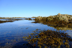Water views (zassle) Tags: beach coastal landscape rockpools scenery camera:make=fujifilm geocountry geocity geostate exif:lens=xf18135mmf3556rlmoiswr exif:focallength=18mm camera:model=xpro2 exif:model=xpro2 exif:make=fujifilm geolocation exif:isospeed=200 exif:aperture=ƒ71