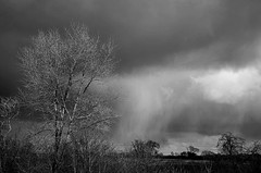 Siberian weather (Dun.can) Tags: winter leicestershire landscape beastfromtheeast trees light storm snow clouds blackwhite