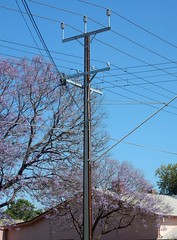 Busy Electric Junction (mikecogh) Tags: mileend jacaranda flowers purple stobiepole telegraphpole wires intersection
