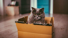 15.12.2017 (Fregoli Cotard) Tags: cat box catinthebox konesso christmaspresent gloomyday cutekitty cutecat funnycat funnykitty catsofflickr britishlonghair britishcat british longhair dlugowlosy dailyjournal dailyphotography dailyproject dailyphoto dailyphotograph dailychallenge everyday everydayphoto everydayphotography everydayjournal aphotoeveryday 365everyday 365daily 365 365dailyproject 365dailyphoto 365dailyphotography 365project 365photoproject 365photography 365photos 365photochallenge 365challenge photodiary photojournal photographicaljournal visualjournal visualdiary 349365 349of365