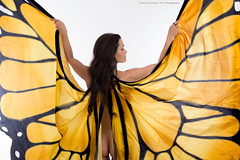 Spread your wings and Fly! (Dana Brady -Thank you for 2 Million views) Tags: butterfly wings monarch transformation rebirth beauty