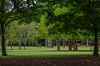 Natureza (Denis Svet) Tags: parque do ibirapuera