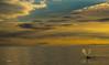 (CANNIVALS) Tags: argentina puertopiramide peninsulavaldes ballena whale vidasalvaje horizonte atardecer ballenafranca sony fullframe travel aventura puestadesol oceanoatlantico