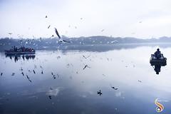 Worlds apart (Shikher Singh) Tags: yamuna yamunaghat birds siberiangulls gulls boats row rowing oar boatmen sailing flying reflection waterbody river bluesky tourists travel travellers makeshift horizon shikhersimagery