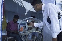 (Flora Eiffel) Tags: calcutta kolkata india inde marché marketplace canon80d canon 80d streetfood street rue personnes bird oiseau