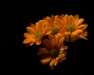 Group of Orange Mums 0115
