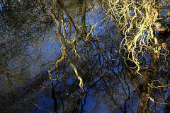 Day #3669 (cazphoto.co.uk) Tags: blue sky branches hylandspark reflections trees water chelmsford project365 beyond3653 160118 nature panasonic lumix dmcgx8 panasonic1235mmf28lumixgxvarioasphpowerois